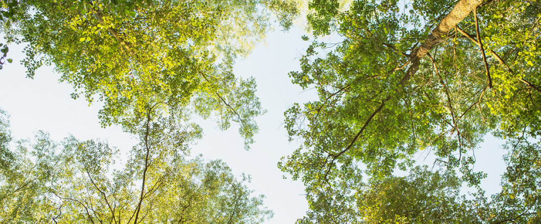 ENDURING TREES | SUSTAINABLE APPROACH